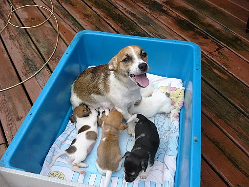 Dogs For Sale Wisconsin Dells Wi - Dog Breed
