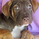 Adopt A Pet :: Marty