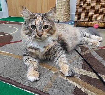 Adopt A Pet :: Brandy (courtesy list)  - Devon, PA