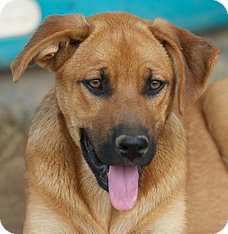 a German Shepherd Mix puppy named Mina