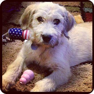 Huntsville, AL - Terrier (Unknown Type, Medium). Meet Hermione a ...