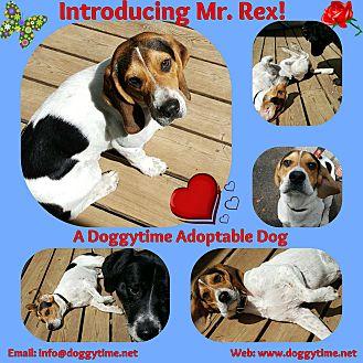 Beagle/Hound (Unknown Type) Mix Dog for adoption in Warkworth, Ontario - Rex