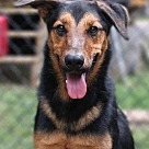Adopt A Pet :: Bodie