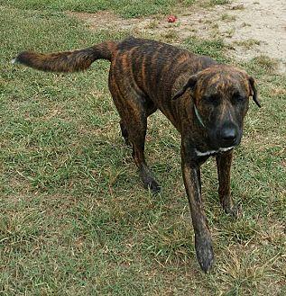 Adopt A Pet :: Laysea  - Snow Hill, NC