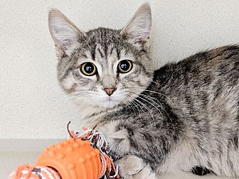 Adopt A Pet :: Dee  - Laramie, WY