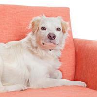 Adopt A Pet :: Jose - Mission Hills, CA