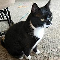 Adopt A Pet :: Luna 2 (COURTESY POST) - Baltimore, MD