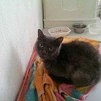 Adopt A Pet :: Marlene - Virginia Beach, VA