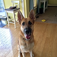 Adopt A Pet :: Groot (COURTESY POST) - Baltimore, MD