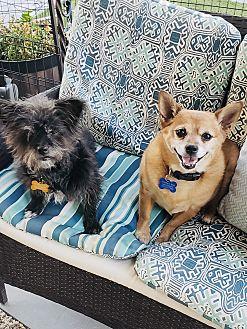 Lola & Penny Photo #1
