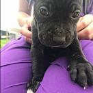 Adopt A Pet :: Ebony $250