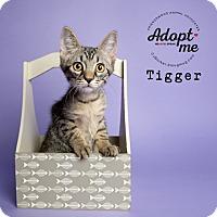 Adopt A Pet :: Tigger - Friendswood, TX