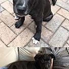 Adopt A Pet :: Jacques