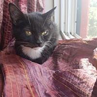Adopt A Pet :: Theon - Hudson, NY
