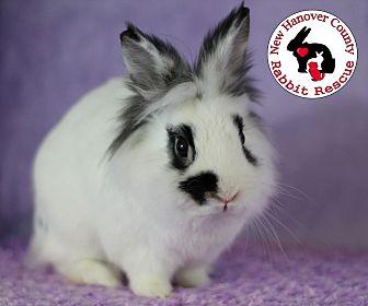 Adopt A Pet :: Speckles  - Wilmington, NC