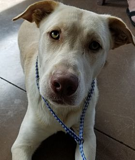 Adopt A Pet :: Andis  - Wilmington, OH