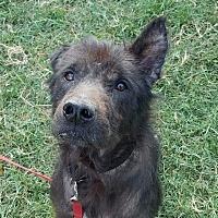 Adopt A Pet :: Cash - Austin, TX