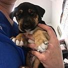 Adopt A Pet :: Baby Levi