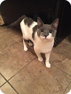 Staten Island Pet Adoption