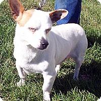 Adopt A Pet :: Parson - Germantown, MD