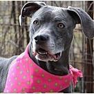Adopt A Pet :: Sheba- COURTESY Post