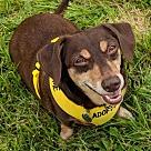 Adopt A Pet :: JR