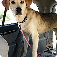 Adopt A Pet :: Sherlock - Starkville, MS