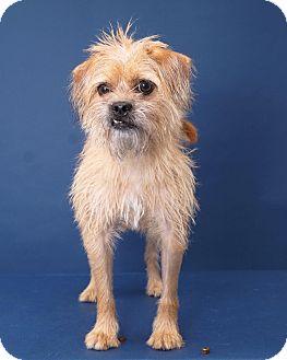 Sudbury Dog Adoption