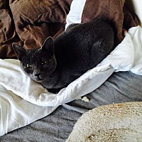 Adopt A Pet :: Jean - Central Islip, NY