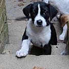Adopt A Pet :: Luna's Oreo