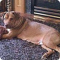 Adopt A Pet :: Annie - La Crosse, WI