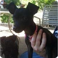 Adopt A Pet :: Sarah - Arlington, TX