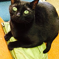 Adopt A Pet :: Cecil - Chattanooga, TN