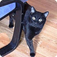 Adopt A Pet :: Buster - Putnam, CT