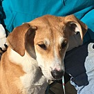 Adopt A Pet :: Luliani