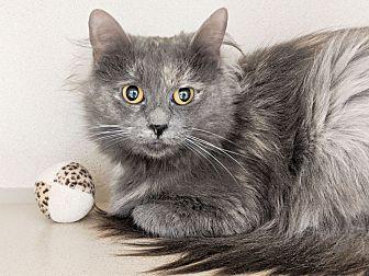 Adopt A Pet :: Goldie  - Laramie, WY