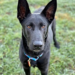 Adopted Pets At Daytona Beach German Shepherd Rescue In Ormond