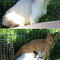 Cowichan Cat Rescue in Duncan, British Columbia