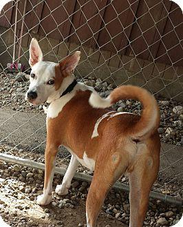 Terrier (Unknown Type, Medium) Mix Puppy for adoption in Freeport, Maine - Magoo