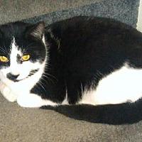 Adopt A Pet :: Percy (Bev's Foster) - Hudson, NY