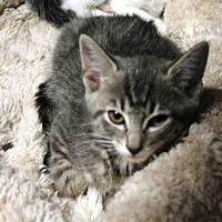 Adopt A Pet :: PEGGY - Hampton Bays, NY