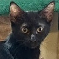 Adopt A Pet :: Allie - Fort Worth, TX