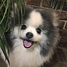 Adopt A Pet :: Lottie