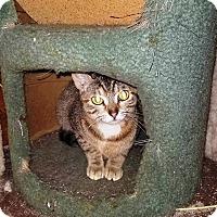 Adopt A Pet :: Maya - Putnam, CT