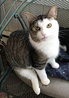 Adopt A Pet :: Nala  - Devon, PA