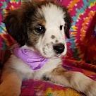 Adopt A Pet :: Fiona (has been adopted)