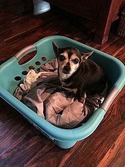 Adopt A Pet :: Georgette  - Renton, WA