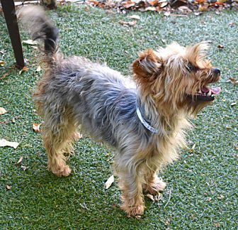 Adopt A Pet :: CUTIEPIE  - Oakland, CA
