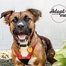 Adopt A Pet :: Lady Lillie