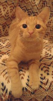 Abigail (Adoption Pending)